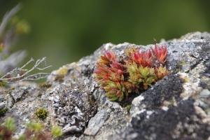 blühende Farben am Gletscherrand