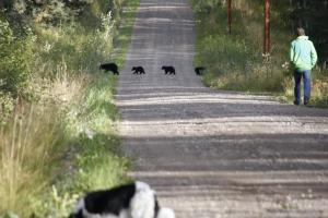 Mutter Bär zieht ab und alle trotten hinterher, der Nachbar biegt gleich rechts den Weg hinunter ab. Er weiß genau, was er tut.